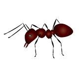 Large ant Stock Photos