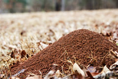 Large ant hill mounded in a field of brown grass Royalty Free Stock Images