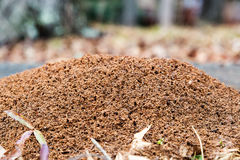 Large ant hill mounded on the ground Royalty Free Stock Photos