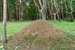 Large anthill Royalty Free Stock Images