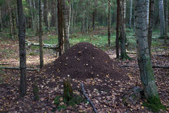 Large anthill in the forest Royalty Free Stock Images