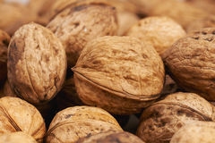 Large appetizing and fresh walnuts. Group of large appetizing and fresh walnuts Royalty Free Stock Photography