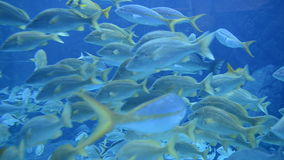 Large Aquarium Fish Tank stock video