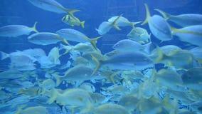 Large Aquarium Fish Tank stock video footage