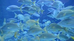 Large Aquarium Fish Tank stock footage