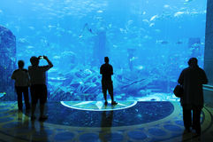 Large Aquarium Stock Photography
