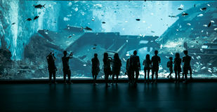 Large Aquarium in Singapore Stock Photos