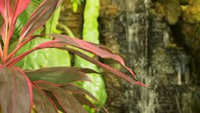 A large artificial waterfall framed by pink flowers and green leaves. stock video footage