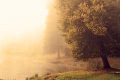 Large aspen on the lake, heavy fog autumn morning.  Stock Image