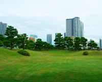 Large and attractive landscape garden in Tokyo. Japanese garden on the background of modern buildings. Pine Tree stock photos