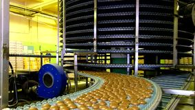 Large automated round conveyor machine in bakery food factory, cookies and cakes production line