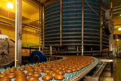 Large automated round conveyor machine in bakery food factory, cookies and cakes production line royalty free stock photography