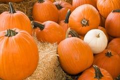 Large autumn pumpkins royalty free stock photos