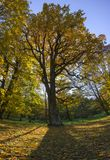 A large autumn tree in the park casts a shadow over the fallen leaves Royalty Free Stock Photo