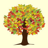 Large autumn tree with yellowed leaves Royalty Free Stock Photo