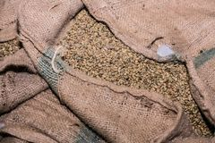 Large bags a raw coffee beans. Coffee bean sorting and processing in a factory Royalty Free Stock Images
