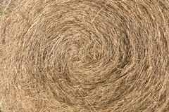 Large bail of hay. Close up. Straw texture. Large bail of hay. Close up. Vegetable texture roll. Dry straw texture royalty free stock images