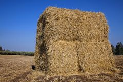 Bale of Hay in a Field. A large bale of hay located in the field it grew in Royalty Free Stock Image