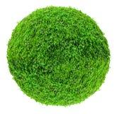 Large ball shaped bush isolated on white background Stock Photos