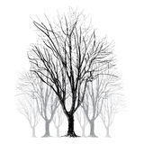Large bare tree without leaves - hand drawn Royalty Free Stock Photography