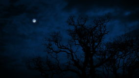 Large Bare Tree Under Full Moon. Large old tree with no leaves in winter with moon above stock footage