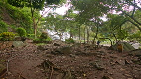 Large Bare Trunk of Tropical Tree among Wild Forest. Large bare conical brown trunk of tropical tree ceiba on glade among wild forest through branches stock footage