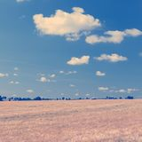 Large Barley Field & Blue Sky Instagram Square Royalty Free Stock Photography