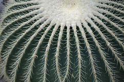 Large Barrel Cactus with Lots of Thorns in the Desert. Pretty large barrel cactus with lots of thorns and spines royalty free stock photo