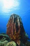 Large barrel sponge Royalty Free Stock Images