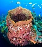 Large barrel sponge Royalty Free Stock Photo