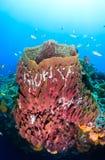 Large barrel sponge Stock Photo