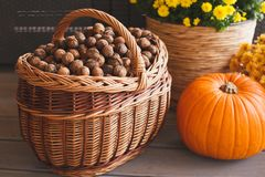 Large basket of freshly picked walnuts. Royalty Free Stock Photos