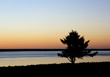 Large Beach Tree Silhouette At Sunset royalty free stock images