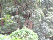 Large beautiful coloured spider in forest. Yellow and black coloured beautiful spider with large spider webhigh resolution image with trees in background royalty free stock image