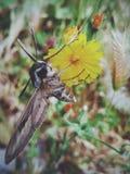 Large and beautiful moth Stock Photo