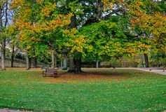Large Beech tree in autumnal colors in Castle garden of Fulda, Germany Royalty Free Stock Photo