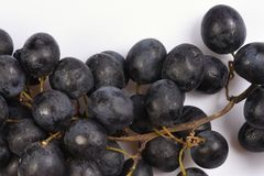 Large berries on a bunch of black grapes on a white background. Large berries on bunch of black grapes on a white background Stock Photography