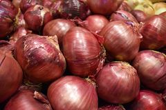 Fresh raw bulk of red onions. A large bin of fresh raw red onions in bulk with bright colored outer onion skins royalty free stock photos