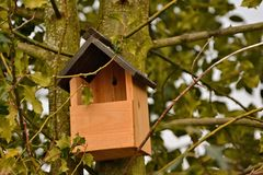 Large bird box for larger birds fixed to a holly tree. Royalty Free Stock Images