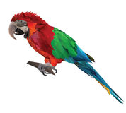 Large bird, colorful parrot macaw sitting on a brunch Stock Images