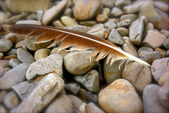 Bird Feather on Beach Pebbles Stock Images