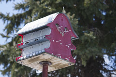 Large Bird House Stock Photo