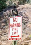 Large bird parking on sign Royalty Free Stock Photo