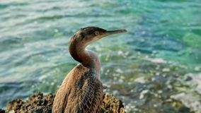 Large bird at the shore stock footage
