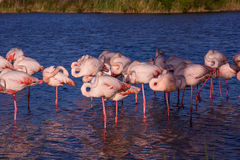 Large  birds roost at sunset Stock Photography