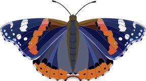 Large black and blue butterfly with orange and white spots. Red admiral butterfly Vanessa atalanta. Vector illustration. vector illustration