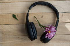 Large black headphones and purple flower. On a wooden background royalty free stock photo