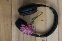 Large black headphones and purple flower. On a wooden background royalty free stock images