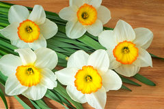 Large blossoming narcissuses on a table. Royalty Free Stock Photo