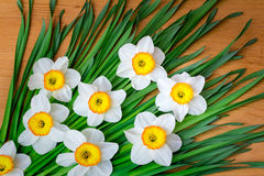 Large blossoming narcissuses on a table. Royalty Free Stock Images